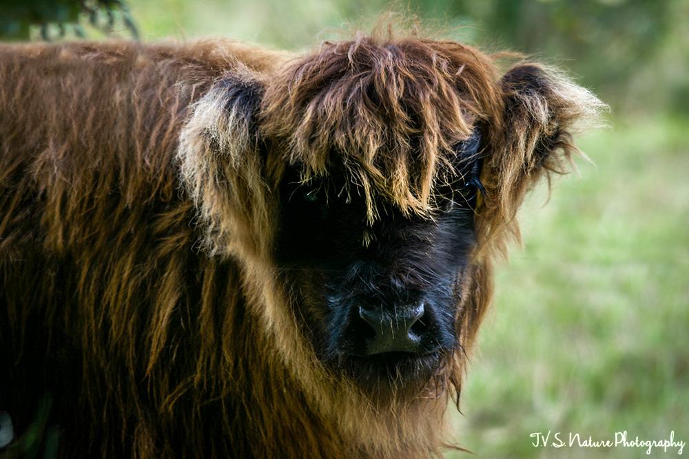 Schotse-jong.1000