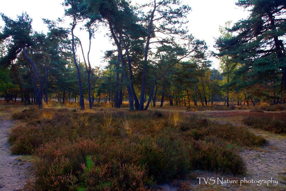 tvs_0432-nef